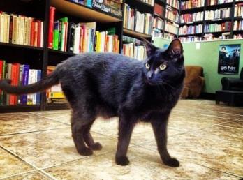 kitty-wan-kenobi-startled