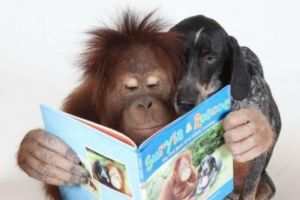 aa766327977e2255ec347d09391d16cb--orangutans-bffs
