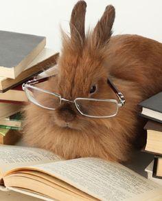cute-bunny-reading